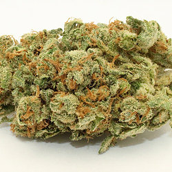 Buy Sour Diesel (DNA Genetics)