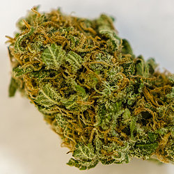 Buy Strawberry Diesel Strain