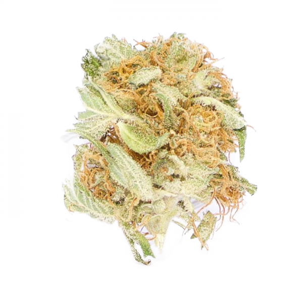 Blueberry Tangie For Sale