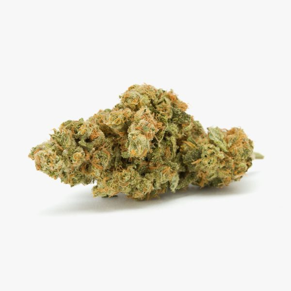 Chocolope strain for sale