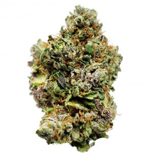 Himalayan Gold Cannabis for sale